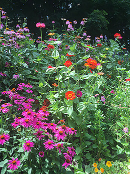 Natural garden design Washington CT